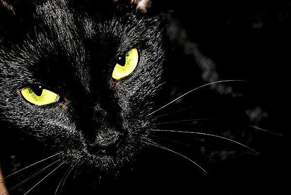 superstizioni gatto nero